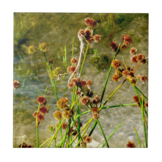 Pond shore plants, spiked puffs on stems photo tile
