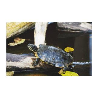 Pond slider turtle in the wild canvas print