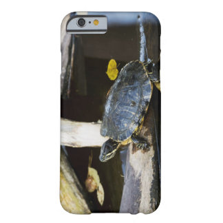 Pond slider turtle in the wild barely there iPhone 6 case