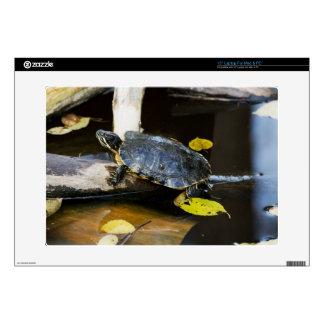 Pond slider turtle in the wild laptop skin