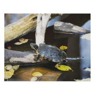 Pond slider turtle in the wild panel wall art