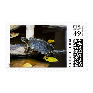Pond slider turtle in the wild stamp