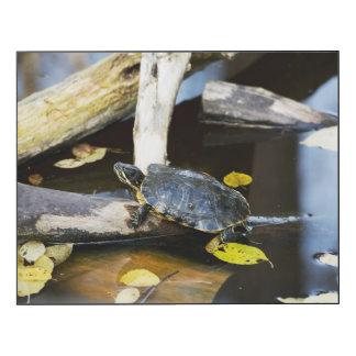 Pond slider turtle in the wild wood wall art