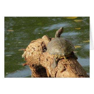 Pond Turtle Card