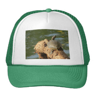 Pond Turtle Mesh Hat