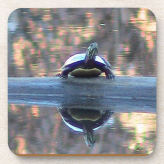 Pond Turtle Reflection Coaster