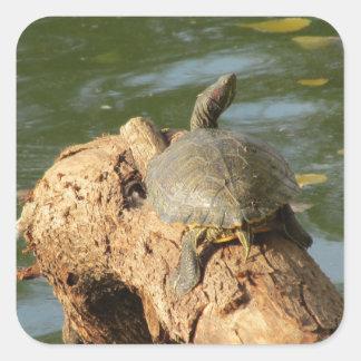 Pond Turtle Square Sticker