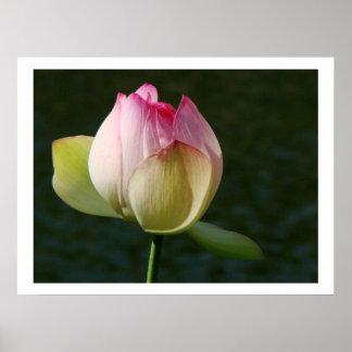 Pond Water Garden Waterlily Flower Floral Lilypads Poster