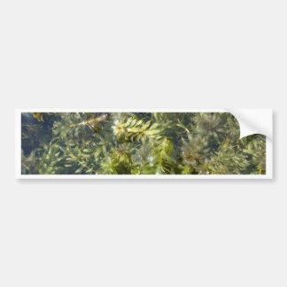 "Pond Weed (or, ""Lush Pond Plantlife"") Bumper Sticker"