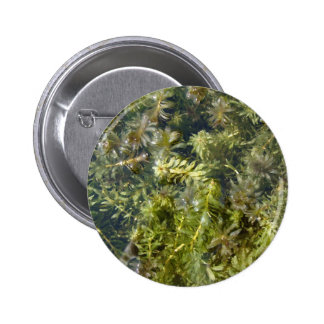 "Pond Weed (or, ""Lush Pond Plantlife"") Button"