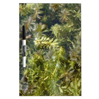 Pond Weed or Lush Pond Plantlife Dry Erase White Board