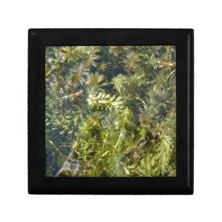 "Pond Weed (or, ""Lush Pond Plantlife"") Gift Box"