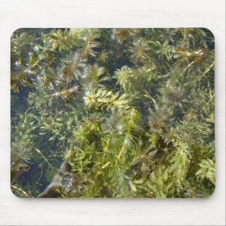"""Pond Weed (or, """"Lush Pond Plantlife"""") Mouse Pad"""