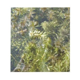 "Pond Weed (or, ""Lush Pond Plantlife"") Notepad"