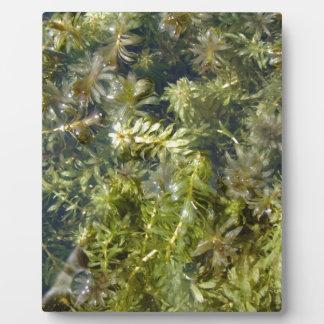 "Pond Weed (or, ""Lush Pond Plantlife"") Plaque"