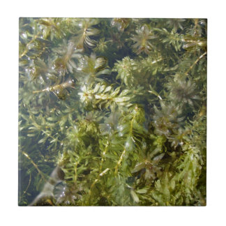 "Pond Weed (or, ""Lush Pond Plantlife"") Tile"