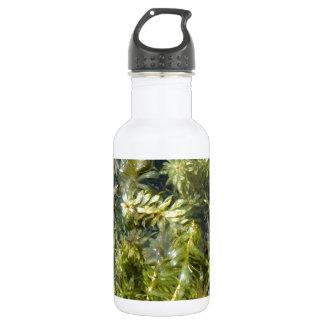 "Pond Weed (or, ""Lush Pond Plantlife"") Water Bottle"