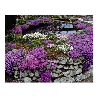 Pond with Aubrieta Arabii and bridge flowers Postcards