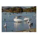 Pond with Birds Poster