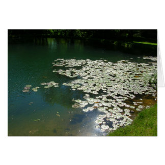pond  with lilypads card