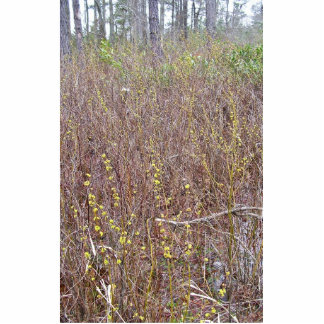 Pondberry, Lindera melissifolia habitat Acrylic Cut Outs