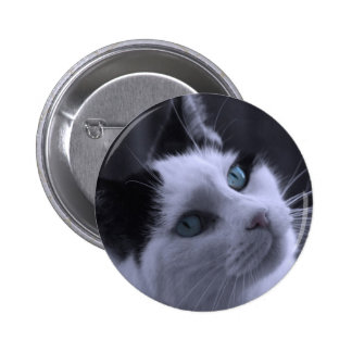 Ponder Kitty Photo Buttons