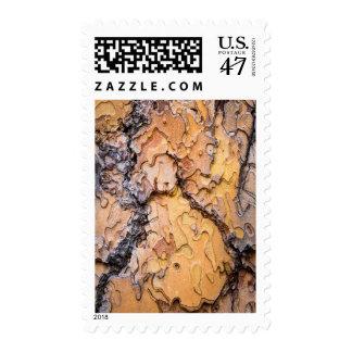 Ponderosa pine bark, Washington Postage