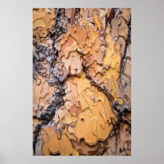 Ponderosa pine bark, Washington Poster