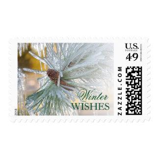 Ponderosa pine needles are encased in ice stamp