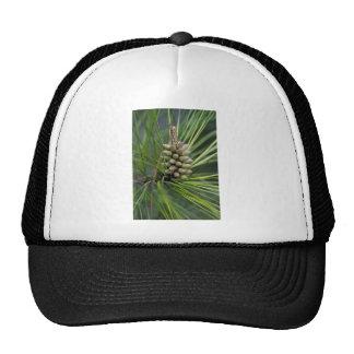 Ponderosa Pine New Growth Trucker Hat