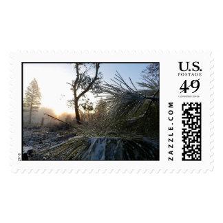 Ponderosa Pines Perspective Postage Stamps