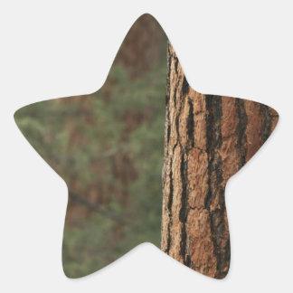 Ponderosa Pines Sticker