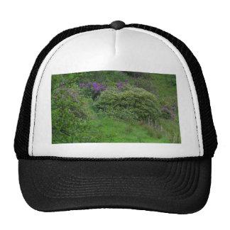 Ponds Bushes Hat