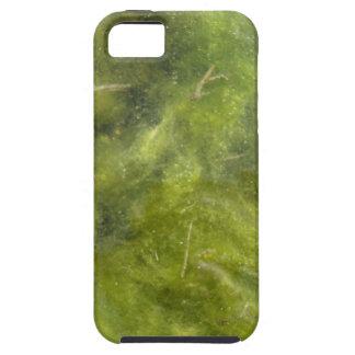 Pondscum iPhone 5 Carcasa
