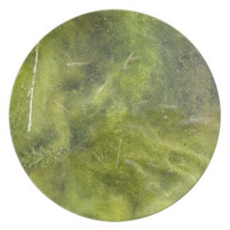 Pondscum Melamine Plate
