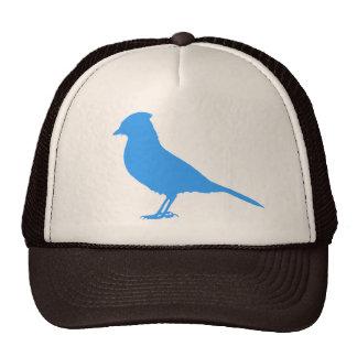 Ponga un pájaro en él - gorra del arrendajo azul