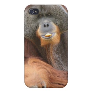 Pongo Ape iPhone Case Cases For iPhone 4
