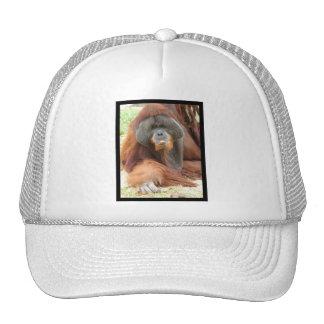 Pongo Orangutan Ape Baseball Hat