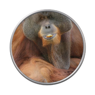 Pongo Orangutan Ape Jelly Belly Candy Tin