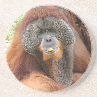 Pongo Orangutan Ape Coasters