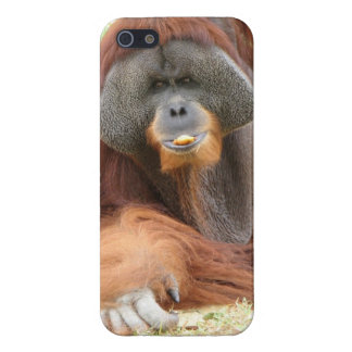 Pongo Orangutan Ape iPhone SE/5/5s Cover