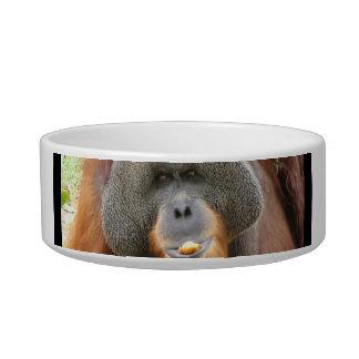 Pongo Orangutan Ape Pet Bowl Cat Bowls