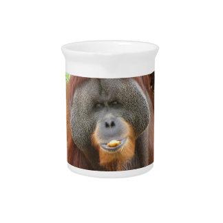 Pongo Orangutan Ape Pitcher