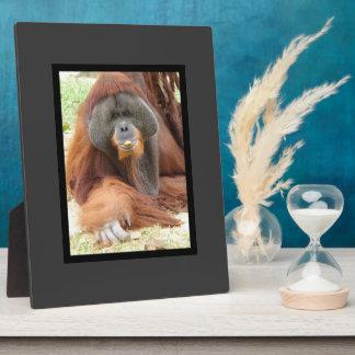 Pongo Orangutan Ape Plaque
