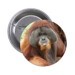 Pongo Orangutan Ape Round Pin