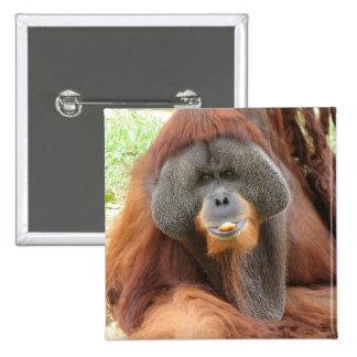 Pongo Orangutan Ape Square Pin
