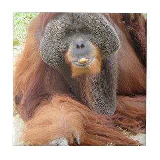 Pongo Orangutan Ape Tile
