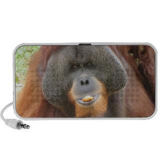 Pongo Orangutan Speakers