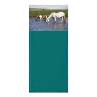 Ponies At Watering Hole rack cards