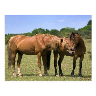 Ponies in Love Postcard